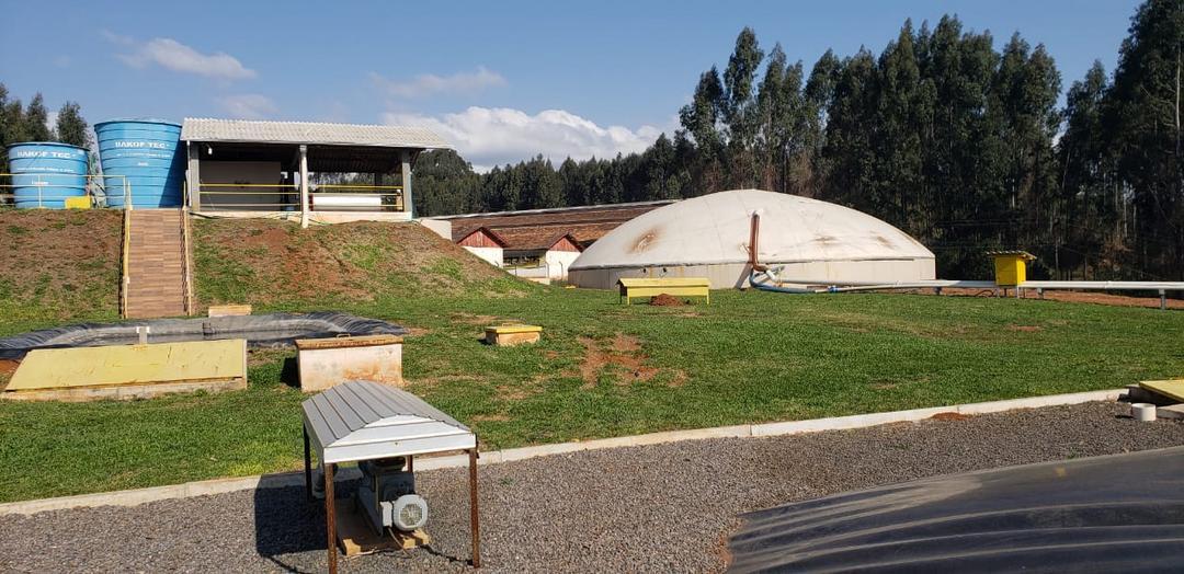 Como gerar biogás de animais mortos não abatidos