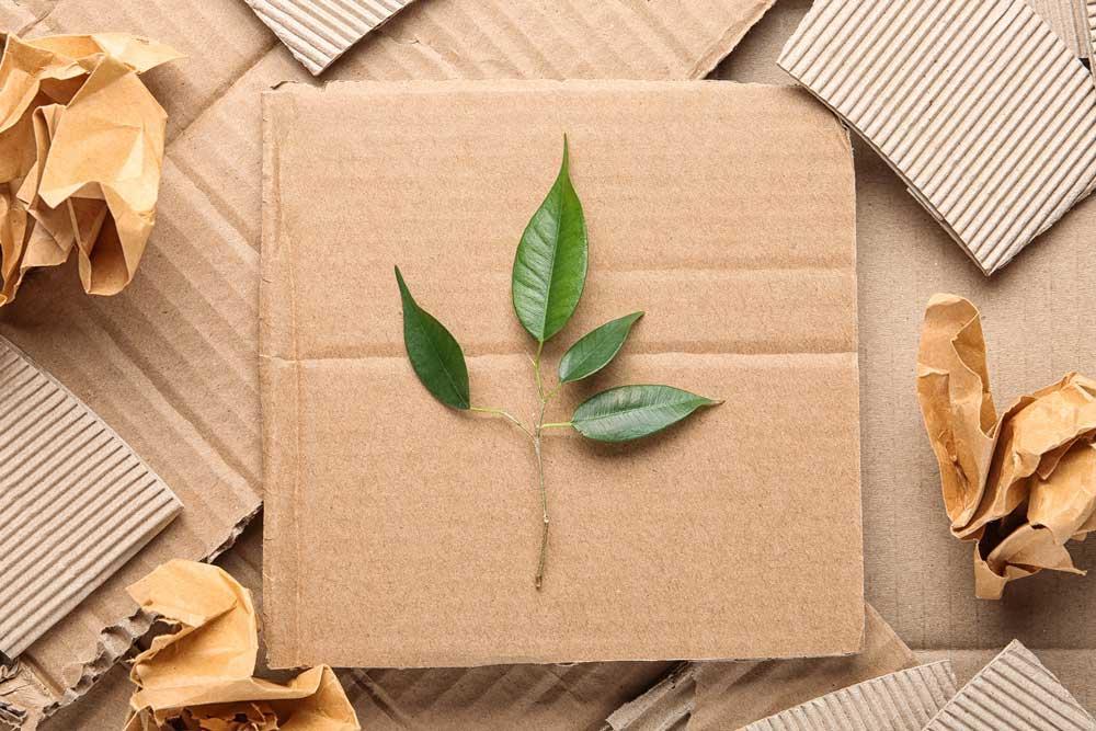 Campanhas ambientais que podem ser adotadas na sua empresa