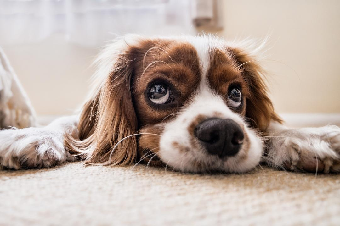 Oportunidade: pets ganham mais serviços e produtos