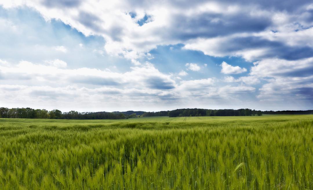 O meio ambiente e o seu negócio em alimentação