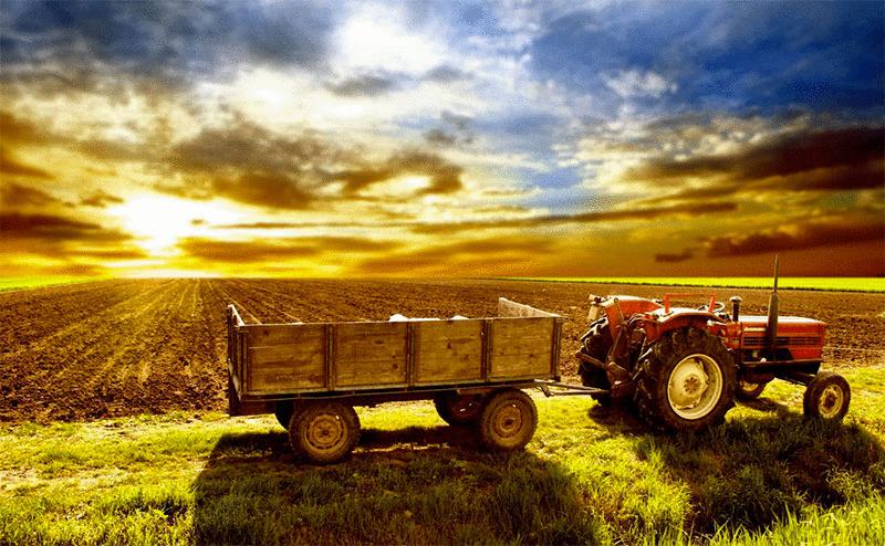 Agronegócio | Setor do agronegócio mantém ritmo de crescimento no Paraná