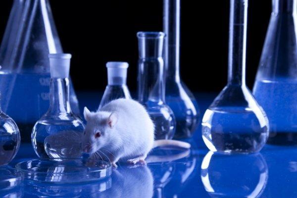 Human on a chip: O teste de novos medicamentos que substitui os animais