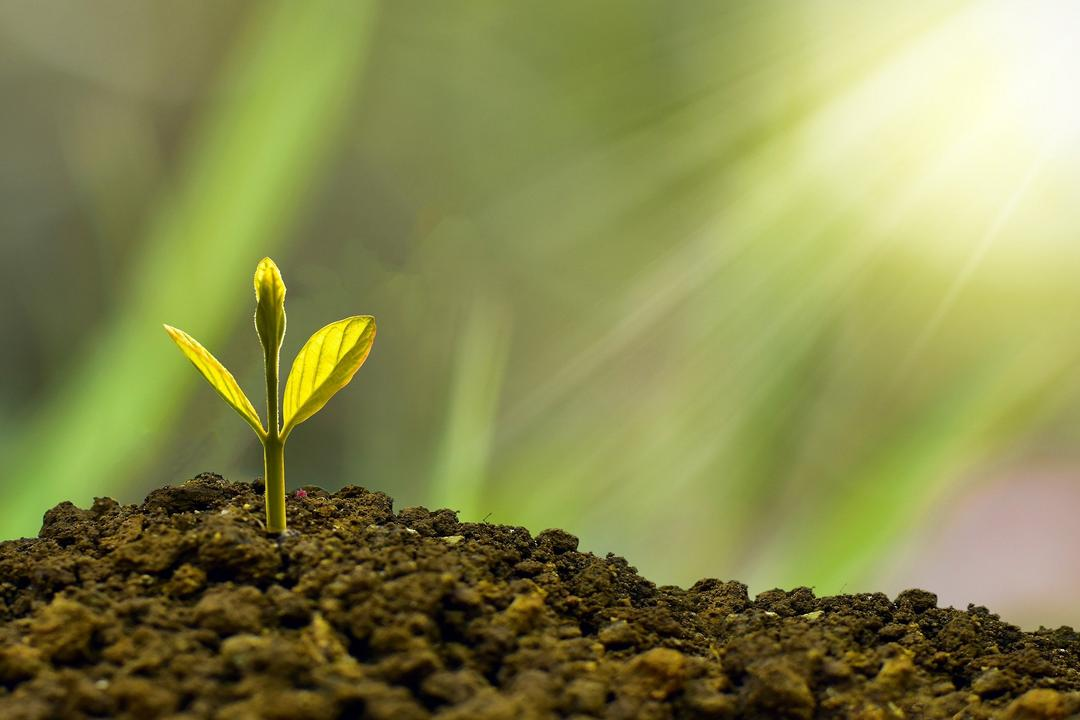 Como fazer a Gestão Financeira no Agronegócio