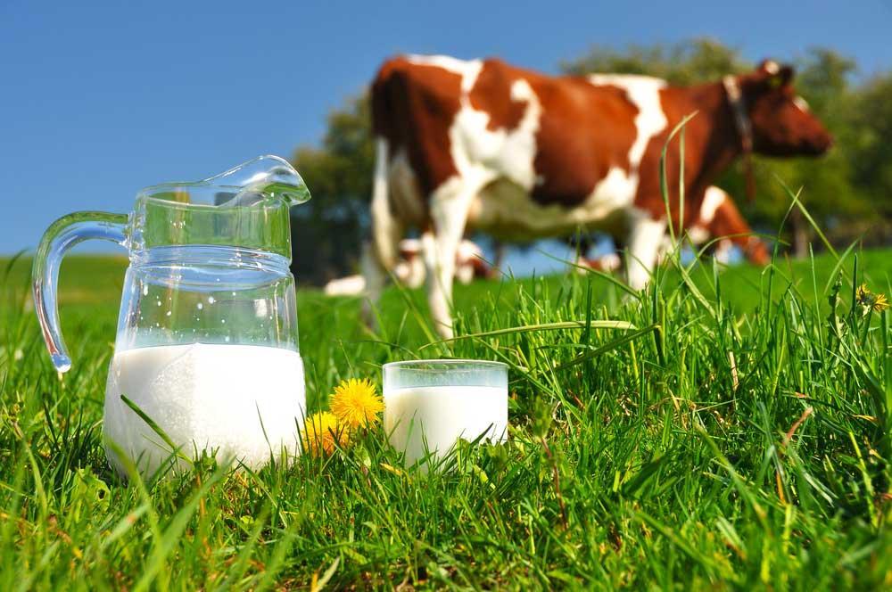 Terrorismo Nutricional: leite faz mal à saúde?