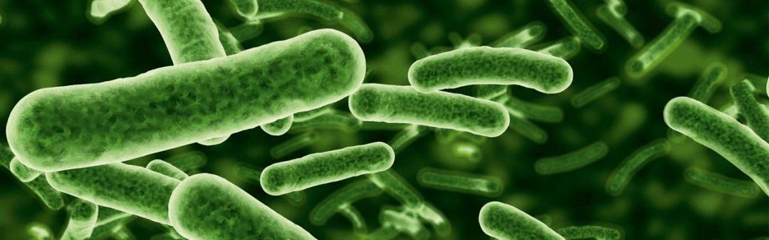 O que é a biodigestão anaeróbica, afinal?