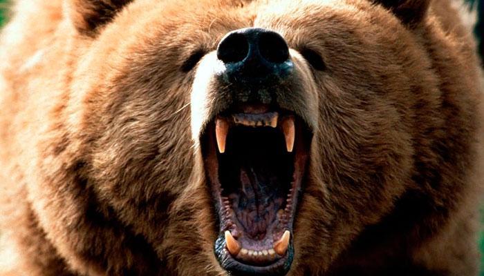 Empresas urso e empresas leão. Como sua empresa passará pelo Covid-19?