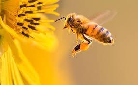 Que bicho é esse? Sem ele, não haverá alimento.  Abelhas: essenciais na natureza.