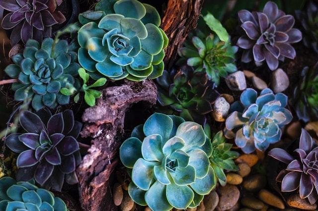 Retomada gradativa do mercado de flores e plantas tem sido a