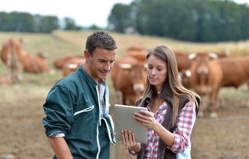 Planejamento e gestão são essenciais para garantir o lucro na pecuária