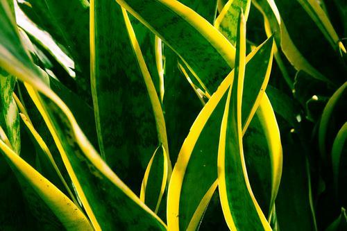 Empreendedoras de flores e plantas criam alternativas 'verdes' para o perecível