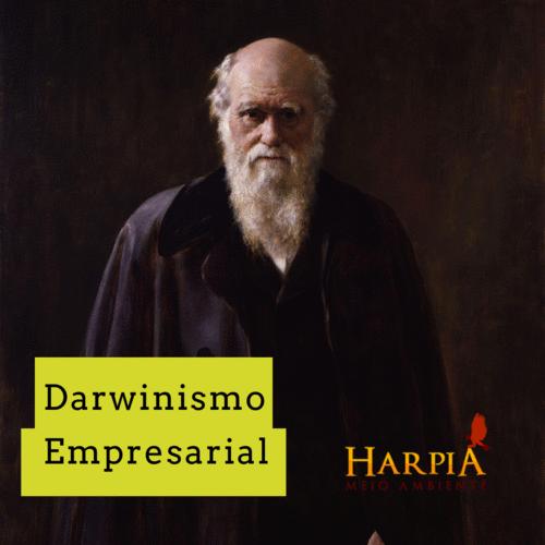 DARWINISMO EMPRESARIAL: qual fator garantirá a perenidade do seu negócio?
