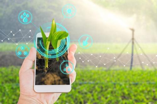 Inteligência Artificial e vendas online, geram transformação digital das agroindústrias