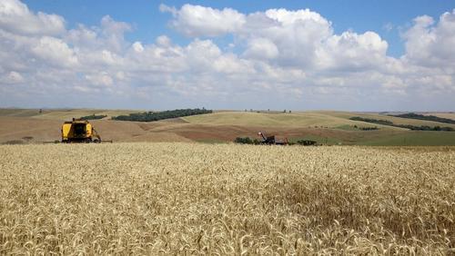 A História da Agricultura Paranaense – Parte 1