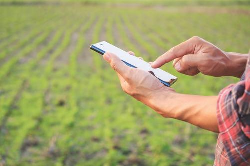 Tela do celular - monitoramento da pastagem para a tomada de decisão