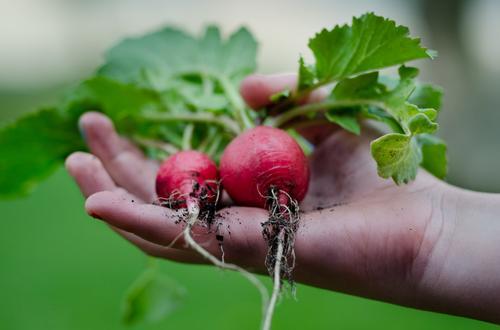 Horta Suspensa – 5 Formas Simples Para Fazer