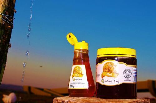 Indicação Geográfica de produtos apícolas no Paraná