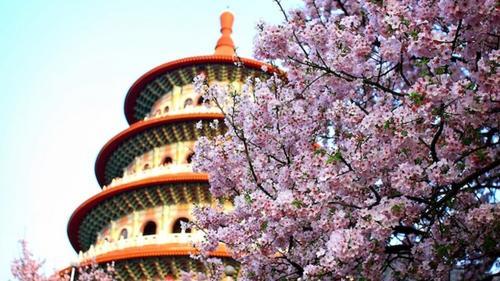 As árvores mais importantes da China estão escondidas à vista de todos