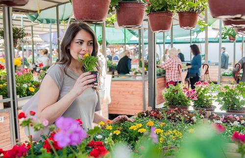 Vale a pena abrir um Garden Center?