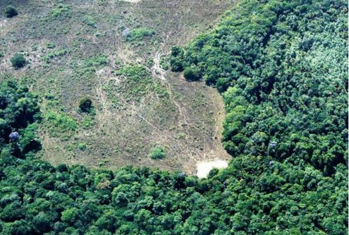 Agroflorestas: O Brasil por uma cultura mais sustentável