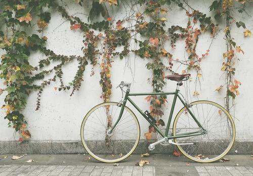 Vida sustentável: Como o MEI pode lucrar com a locação de bicicletas